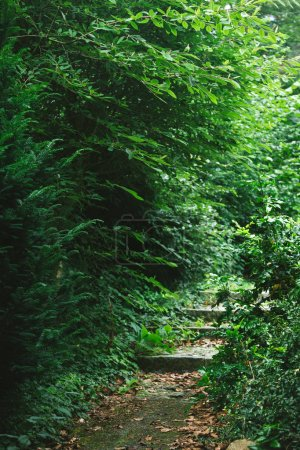 Photo for Stairway between trees with green leaves in forest in Hamburg, Germany - Royalty Free Image