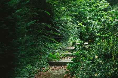 Photo for Stairway in beautiful forest with green trees in Hamburg, Germany - Royalty Free Image