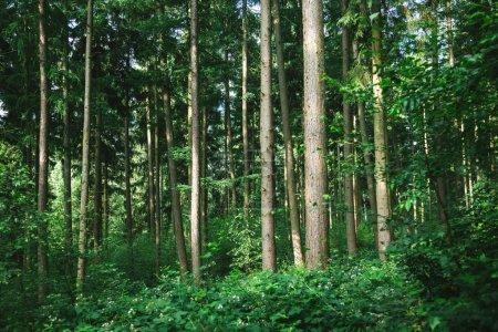 Photo pour Vue panoramique sur les arbres dans la forêt verte à Hambourg, Allemagne - image libre de droit