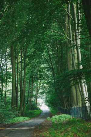 Photo for Road near beautiful green trees in park in Hamburg, Germany - Royalty Free Image