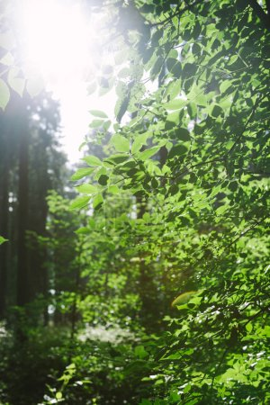 Photo for Forest with leafy trees under sunlight in Hamburg, Germany - Royalty Free Image