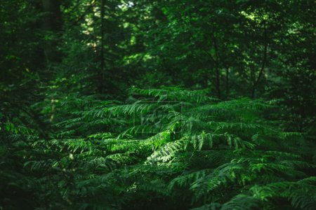 Photo for Green trees in beautiful dark forest in Hamburg, Germany - Royalty Free Image