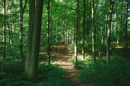 Photo for Path in green forest with trees in Hamburg, Germany - Royalty Free Image