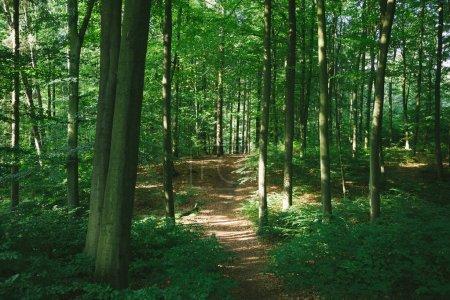 Photo pour Sentier en forêt verdoyante avec arbres à Hambourg, Allemagne - image libre de droit
