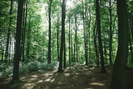 Photo for Green forest with trees under sunlight in Hamburg, Germany - Royalty Free Image
