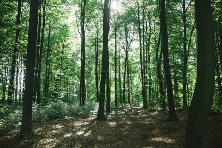 Photo pour Verte forêt avec des arbres sous le soleil à Hambourg, Allemagne - image libre de droit
