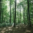 Green forest with trees under sunlight in Hamburg, Germany