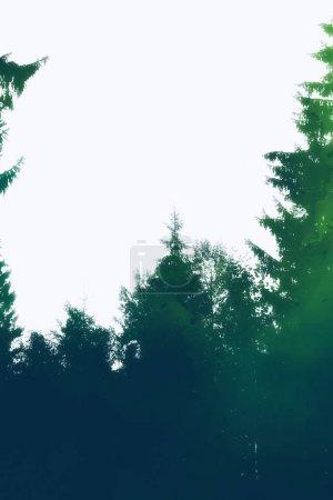 Collage photo : silhouette forestière et texture aquarelle