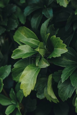 Photo for Full frame shot of beautiful green leaves - Royalty Free Image