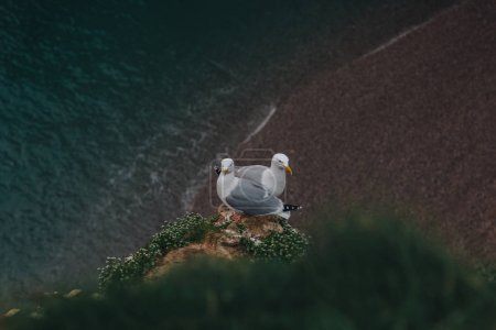 high angle view of seagulls couple perching on cliff over sea, Etretat, France