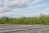 surface level of wooden walkway and green grass at cloudy day