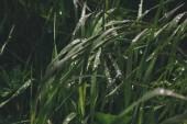 """Постер, картина, фотообои """"трава"""""""