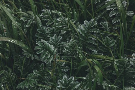 Photo for Full frame shot of beautiful green plants - Royalty Free Image