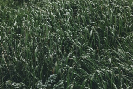 Photo for Full frame shot of beautiful green grass - Royalty Free Image