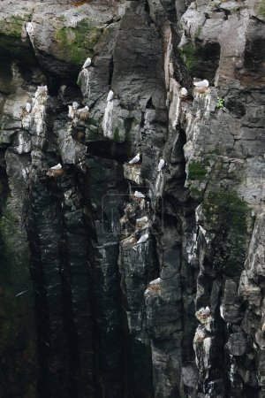 aerial view of large group of seagulls perching on rocky cliff