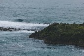 aerial view of large group of seagulls perching on rocky coast of ocean