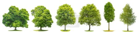 Photo for Collection green trees oak, maple, birch, chestnut. Nature objects isolated on white background - Royalty Free Image