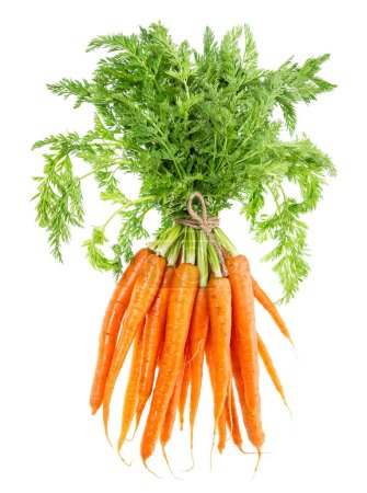 Photo for Bunch of carrots with green leaves isolated on white background. Vegetable. Food - Royalty Free Image