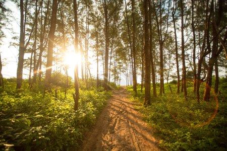 Photo pour Belle matinée dans la forêt de feuillus de l'été - image libre de droit