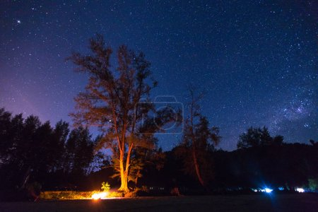 Photo for Scenic view of illuminated tree on beach and starry sky - Royalty Free Image