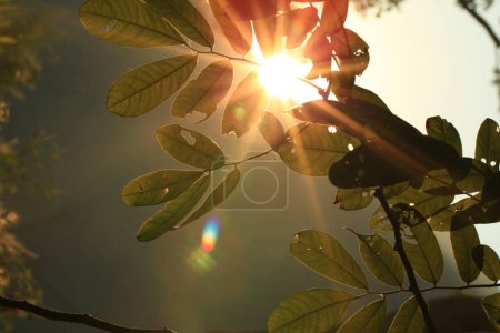 Photo for Sunbeams through green tree leaves - Royalty Free Image