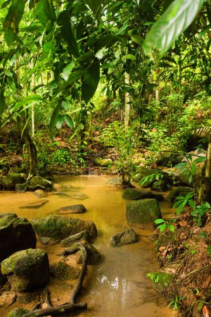 Photo for Picturesque landscape with lush tropical vegetation and flowing river - Royalty Free Image