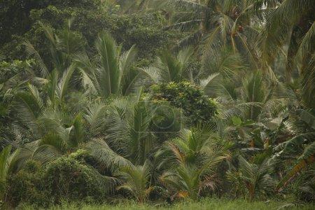 Photo pour Beaux buissons verts exotiques dans le jardin tropical - image libre de droit