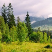 Slopes of mountains, coniferous trees and clouds in the evening sky. Picturesque and gorgeous scene. Location place Carpathian, Ukraine, Europe. Concept ecology protection. Explore the world's beauty.