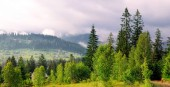Slopes of mountains, coniferous trees and clouds in the evening sky. Location place Carpathian, Ukraine, Europe. Concept ecology protection. Wide photo