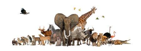 Photo pour Grand groupe de faune africaine, animaux sauvages safari ensemble, dans une rangée, isolé - image libre de droit