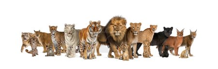 Foto de Gran grupo de muchos gatos salvajes adultos y cachorros juntos en una fila - Imagen libre de derechos