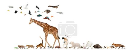 Group of many animals fleeing away, walking in a row, isolated