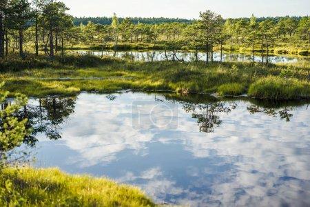 Foto de Vista panorámica del río con la reflexión de las nubes en las plantas de agua y verde alrededor en Riga, Letonia - Imagen libre de derechos