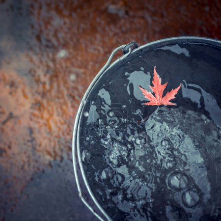 """Photo pour Une feuille d'érable rouge béatifique flotte dans un seau d'étain à la surface de l'eau, sur lequel tombent des gouttes de pluie. Vue du dessus, espace de copie. Concept """"L'automne est arrivé """". - image libre de droit"""