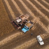An old retro combine unloads soybean seeds in the back of a truck for transportation to the granary. Ukraine. Aerial view.