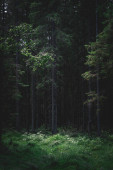 Dark forest in the evening on a summer day with a glossy glade