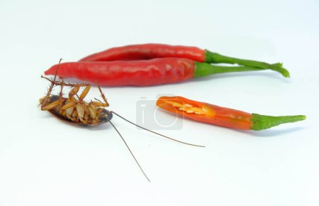 A chili can chase cockroachesClose