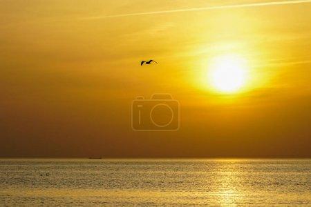 Photo pour Silhouette d'oiseau volant sur un magnifique coucher de soleil de mer - image libre de droit