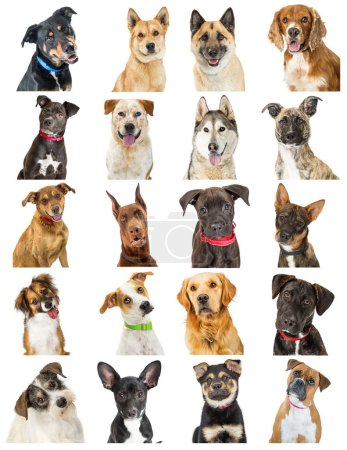 Set of twenty close-up portrait photos of cute dogs of different breeds. Sized to print on letter paper or for use on websites or social media.