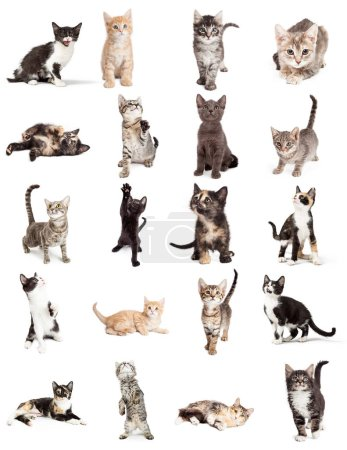 Set of twenty cute young playful kittens on white. Sized to print on letter paper or for use on websites or social media.