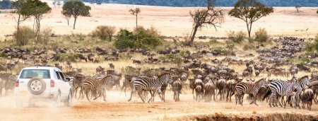 Web Banner of a car on a self safari game drive through large herds of wildebeest and zebra in Kenya, Africa during migration season