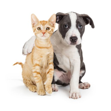Photo for Friendly puppy with arm around cute kitten. Isolated on white. - Royalty Free Image