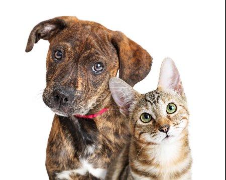 Photo pour Jeune chaton mignon et chiot ensemble regardant la caméra avec des expressions attentives. Gros plan sur blanc - image libre de droit