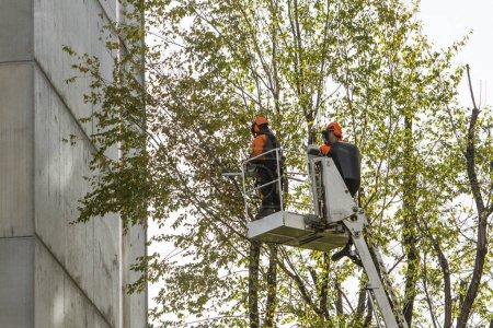 Photo pour Opérateurs dans le panier d'ascenseur tailler les branches des arbres - image libre de droit