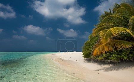 Photo for Tropical beach in Maldives.Tropical Paradise at Maldives with palms, sand and blue sky - Royalty Free Image