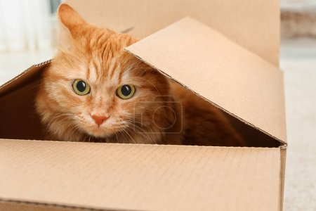 Adorable red cat in cardboard box indoors