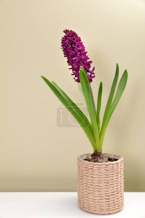 Photo for Beautiful spring hyacinth flower on table against color background - Royalty Free Image