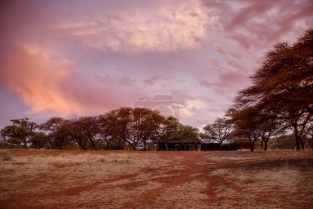 wooden house near trees on sunset background, Southern African savanna