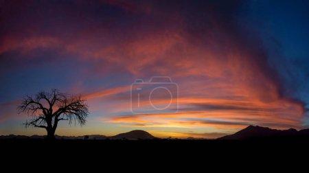 Tree silhouette on dramatic sunset background, Nam...