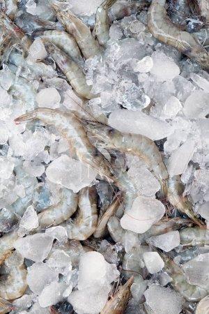Photo for Close up image of Fresh shrimp - Royalty Free Image